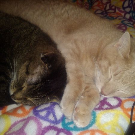 Happy kitties, sleepy kitties, purr purr purr Meow SnuggleBuddies Cats