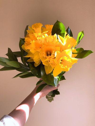 Daffodil Day -