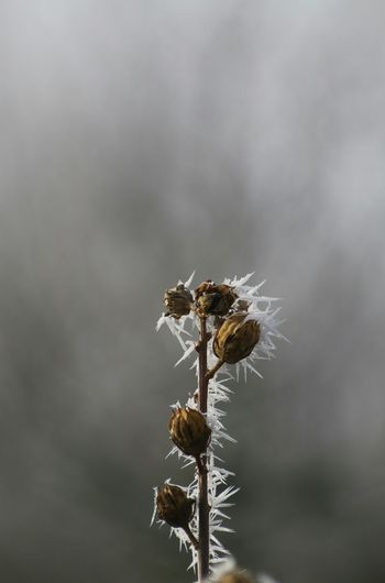 Nature Plant Beauty In Nature Tranquility No People Close-up Outdoors Branch Tree Day Lonely Loneliness Lost Wilted Plant Seed Fragility Freshness Sky Premium Collection Art Is Everywhere