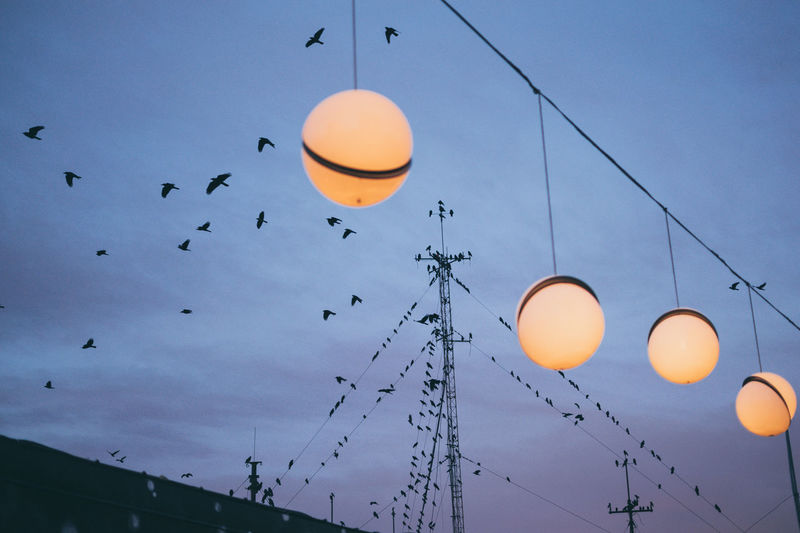 Low Angle View Of Illuminated Lights Against Bird Flying In Sky At Sunset