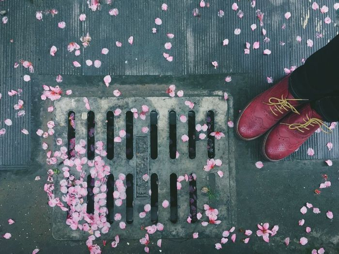 High Angle View Flower Shoe Human Body Part After The Rain Fallen Flower Fallen Petals Petal Petals Pink Pink Color Pink Flower Millennial Pink On The Ground