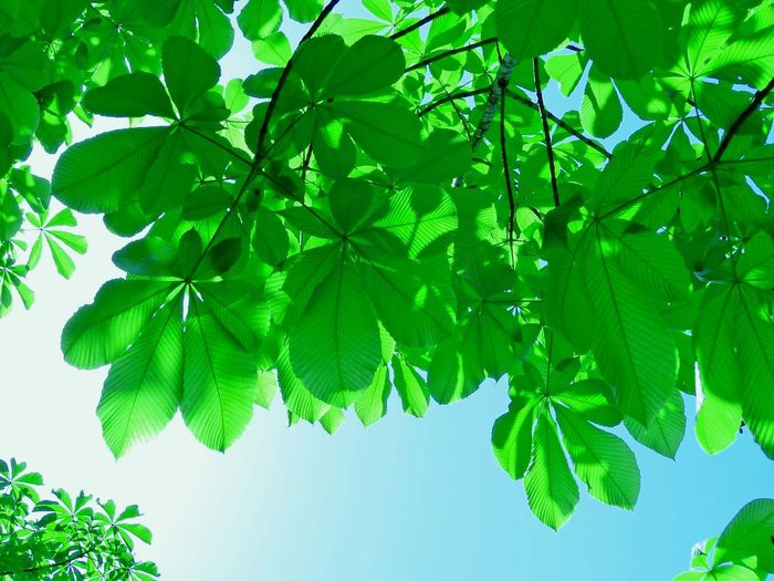 Beauty In Nature Branch Close-up Day Freshness Green Color Growth Leaf Low Angle View Nature No People Outdoors Plant Sky Tree Vivid Green In The Eyes