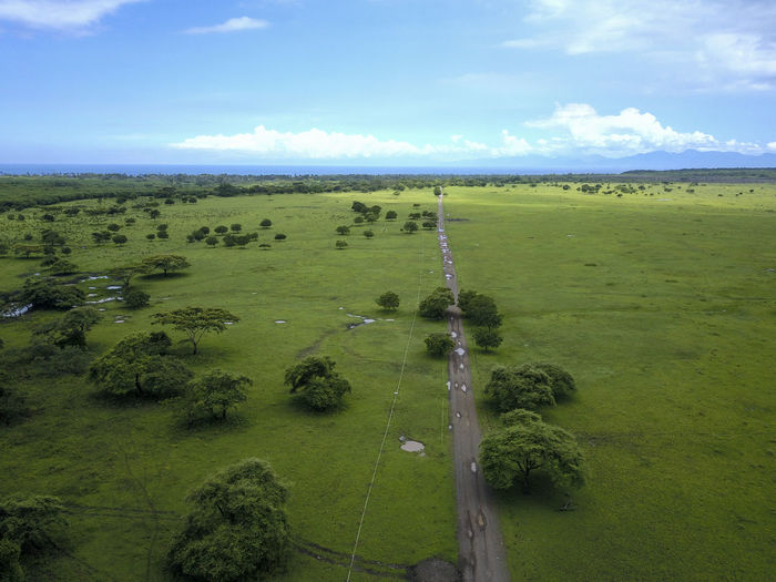 Savanna national park baluran from above Baluran Holiday View Backgrounds Beauty In Nature Cloud - Sky Environment Forest Grass Green Color Indonesia Photography  Jawatimur Land Landscape Nature No People Outdoors Plant Scenics - Nature Sky Tamannasionalbaluran Tourism Travel Destinations Tree Vacation