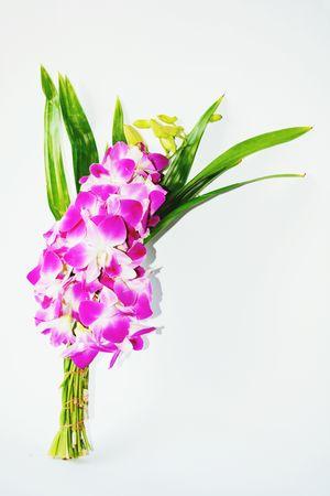 Orchid Flower Purple Nature Flower Head Close-up