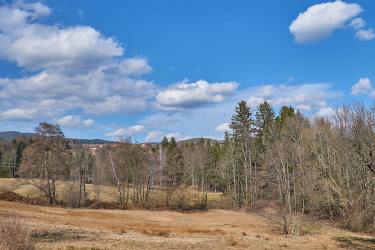 Autumn Blue Blue Sky And Clouds Cloud - Sky Day Easter Ready Forest Landscape Landscape Styria March 2017 March 2017 Natural Disaster Nature No People Outdoors Pinaceae Pine Tree Pine Woodland Scenics Sky Spring Spring 2017 Spring Austria Styria Tree
