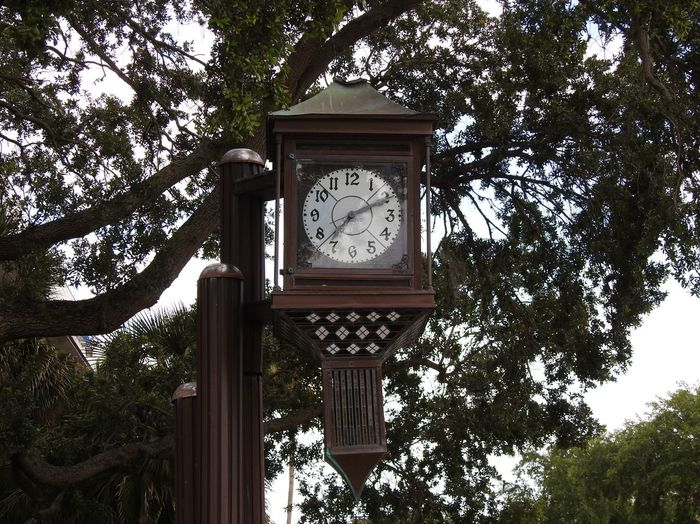 Clock Face Clock Man Made Structure Against The Tree Branches Leaves🌿 Sky In Background Deland, Florida City Photography