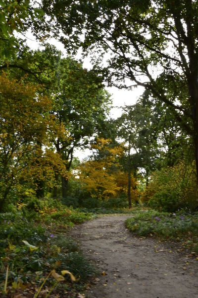 Autumn Autumn Colors Beauty In Nature Beth Chato Gardens Day Elmstead Market Essex Fall Grass Green Color Growth Nature No People Outdoors Path Scenics The Way Forward Tranquil Scene Tranquility Tree WoodLand