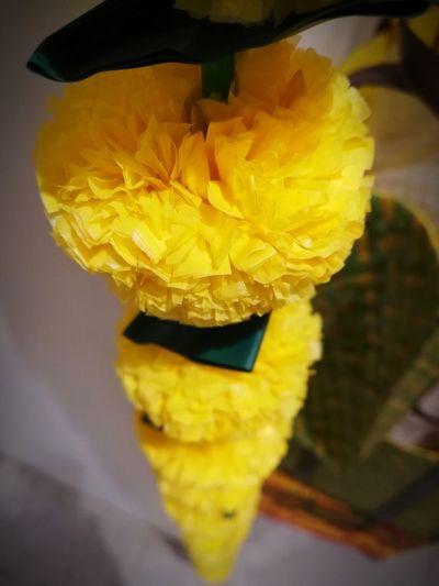 Diwali Flower Yellow Close-up