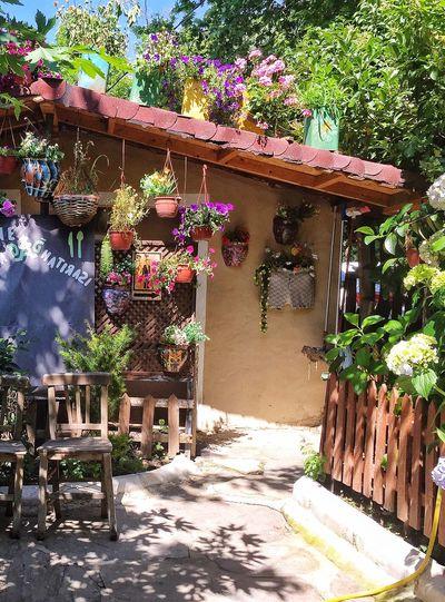 Public Toilet Men Toilet Flower Collection Colors Village Colorful 🌺🌸🌼🍃🌱🚾🚹