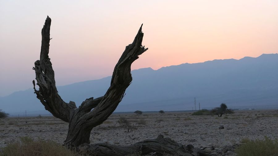 Israel Desert Tree Tree Trunk Sunrise Sky Mountain Nature Beauty In Nature Land Plant Tranquility Tranquil Scene Non-urban Scene Scenics - Nature No People Clear Sky Silhouette Environment Landscape