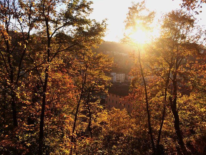 Sunset Hello World Sunrise Sunshine Hanging Out Autumn Leaves Autumn Colors Leaves Landscape Lyon