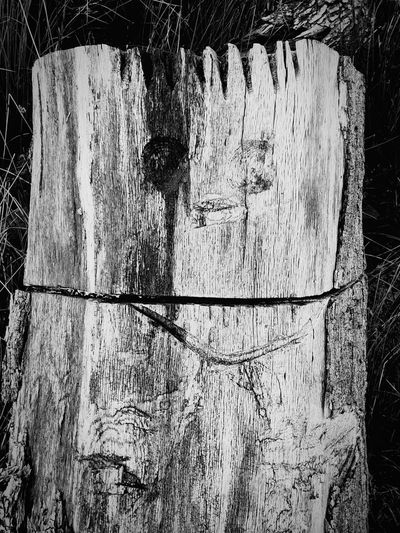 wood face EyeEm Best Shots Eyeemphotography Eye4photography  Walking Around Wildlife & Nature EyeEm Nature Lover Wood Art is Everywhere Face Ink Backgrounds Paint Rough Dirty Black Color Pattern Graffiti