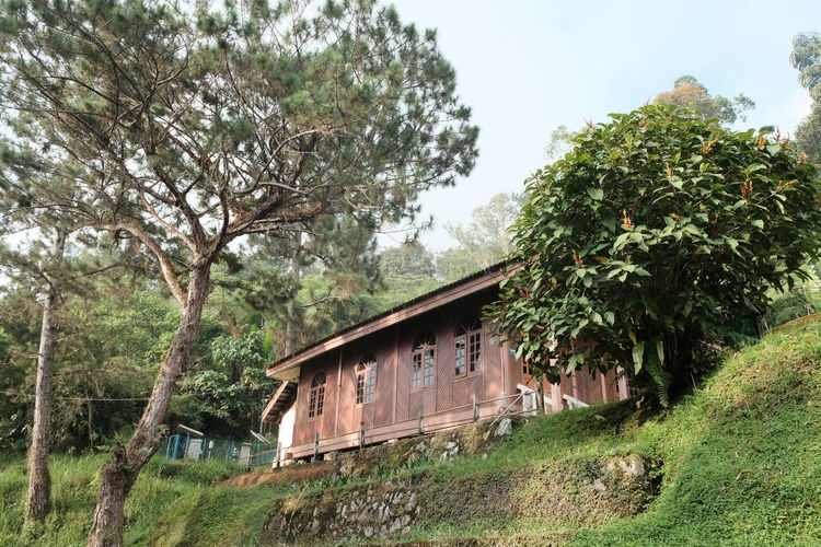 Building Exterior Built Structure Cabin Cabin In The Woods House House By The Hills House By The Sea Housebythewoods Malaysia Malaysiahouse Malaysian House MAXWELLHILL Mossyforest Taiping Tree