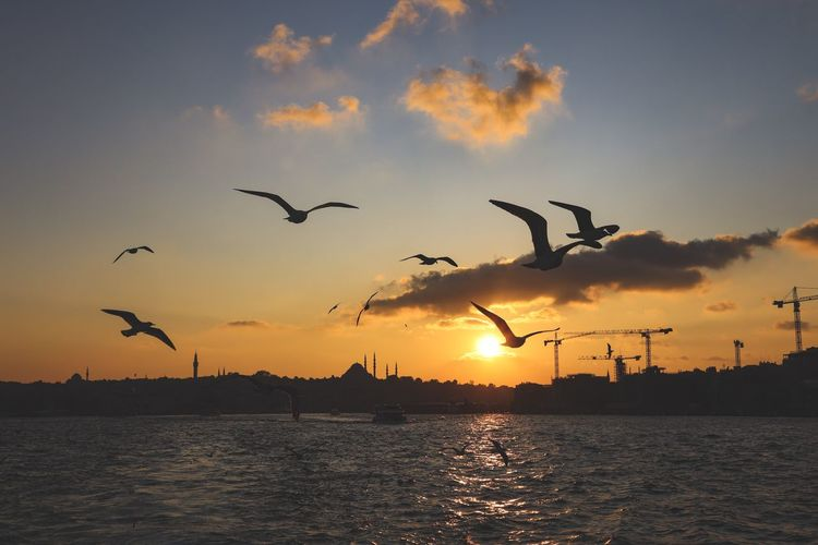 Silhouette of birds flying over sea during sunset