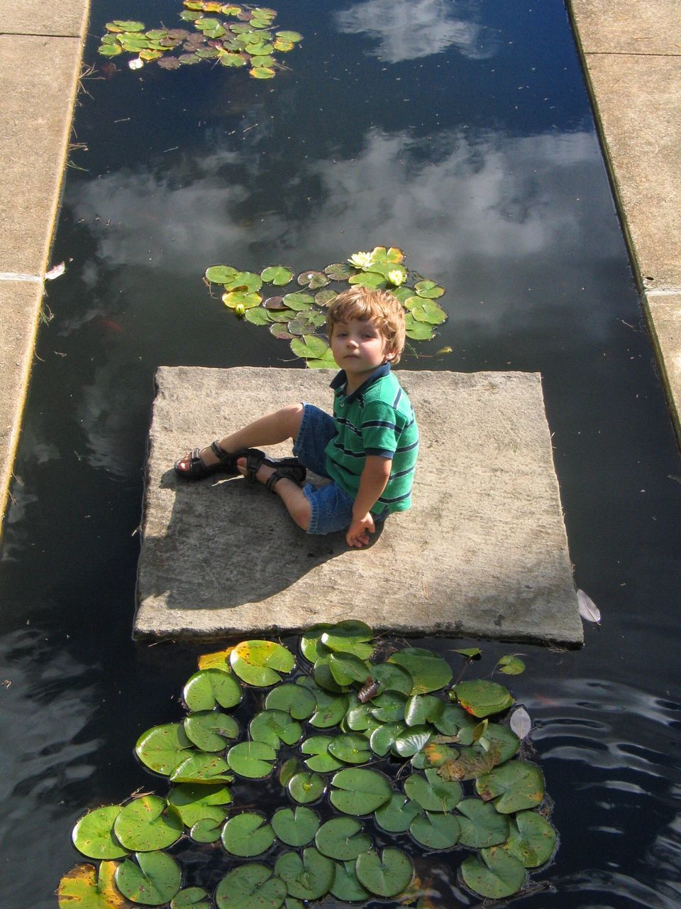 Portrait Of Boy Sitting On Rock By Lily Pads In Pond At Park