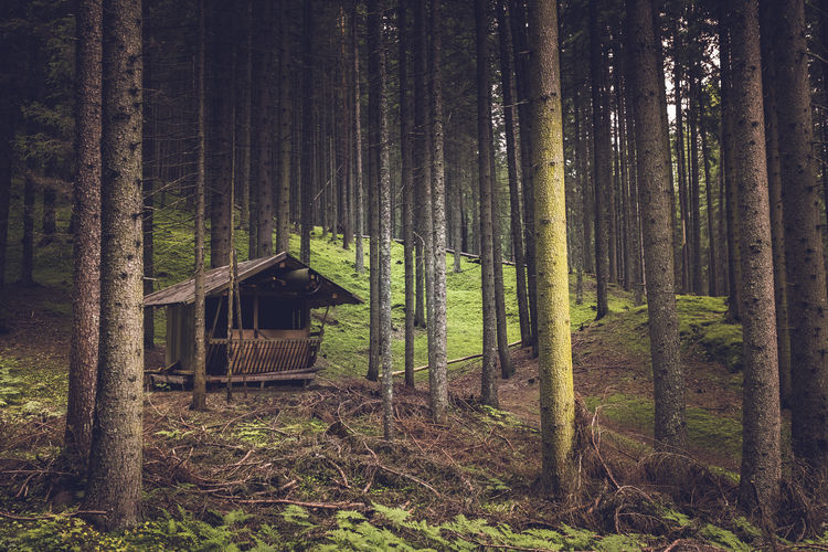 Hut in forest