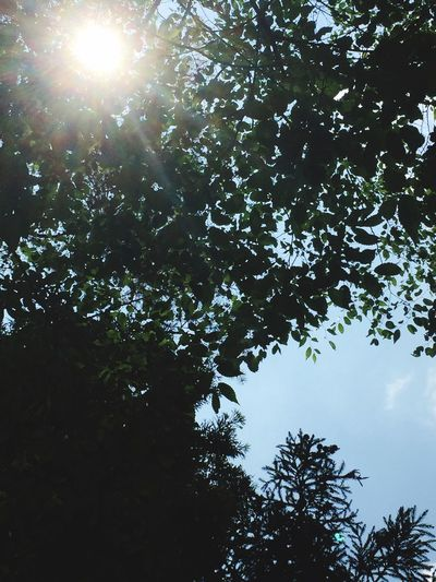 Tree Nature Beauty In Nature Growth Sky Freshness Clear Sky Day Outdoors
