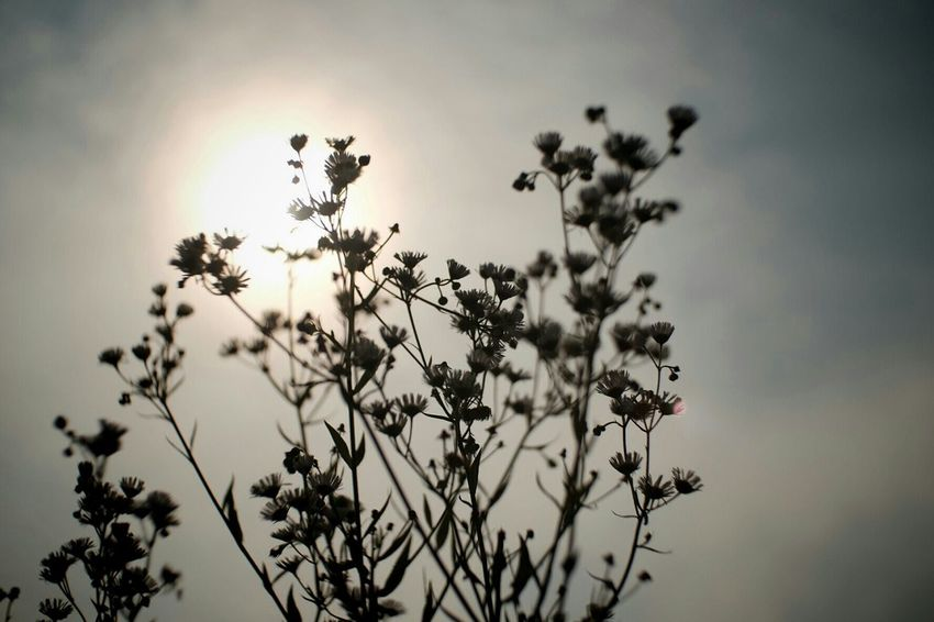 Dance music Nature_collection EyeEm Nature Lover Plants 🌱 Carl Zeiss Jena FUJIFILM X-T1 Sky High Sun Pancolar 50mm F2 Fuji X-T1 Wild Flowers
