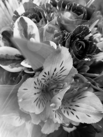 B&W Screziati B&w Flowers Beauty In Nature Bouquet Che Bella Cos 'na Jurnat E Sol Ciao. ✌ MUR B&W New Years Day MUR On EyeEm