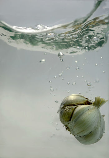 Close-up of garlic in water against white background