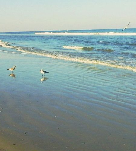 Life Is A Beach Beach Ocean Ocean Bird Waves Oceanside Beach Photography Landscapes With WhiteWall Tropical Paradise Seagulls And Sea Seagull