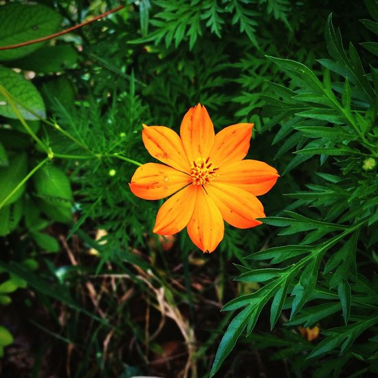 Flower Nature Beauty In Nature Orange Color Green Color Plant Close-up THANK GOD!