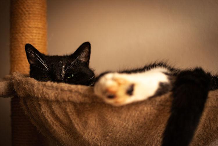 One sleepy cat