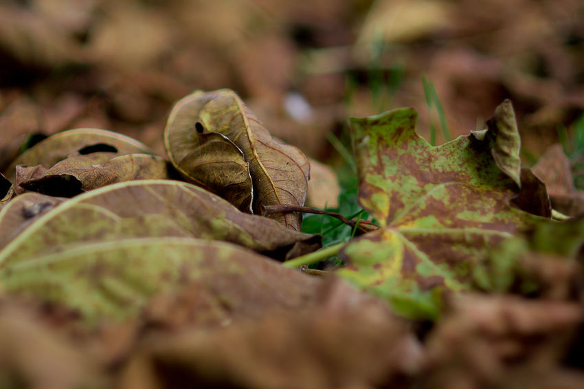 Autumn Colors Autumn Leaves Autumn Beauty In Nature Change Close-up Day Dry Fragility Green Color Leaf Nature No People Outdoors Plant Selective Focus