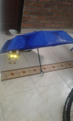 Toby galactico Camouflage Cats Catlovers Cat♡ Light - Natural Phenomenon Cat Watching Ovni ? Depredador Extraterrestrial