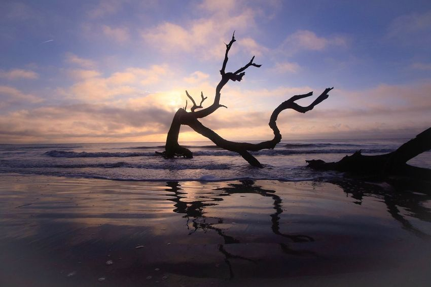 Sea Water Nature Horizon Over Water Beauty In Nature Beach Tranquility Scenics Sky Sunset Reflection Waterfront No People Cloud - Sky Outdoors Branch Dead Tree Tree Day