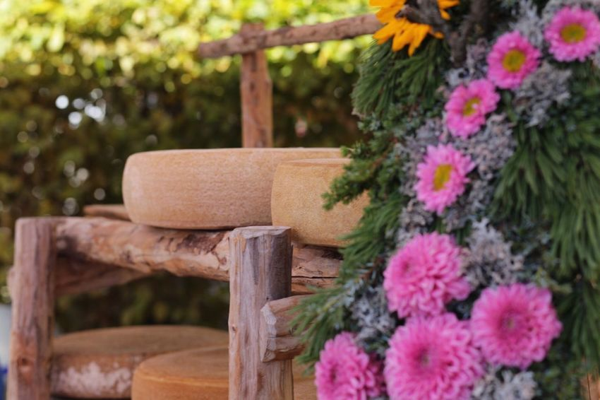 Cheese in Seewis. Bergkäse Älplerfest Prättigau Seewis Cheese EyeEm Selects Flower No People Wood - Material Selective Focus Outdoors Close-up Day