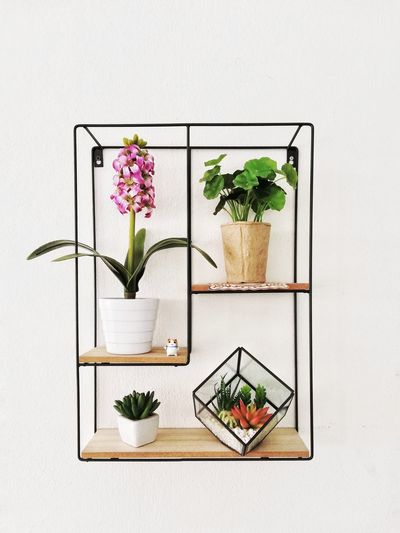 Potted plant in shelf against wall