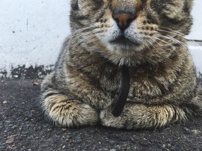 Cat Maximum Closeness