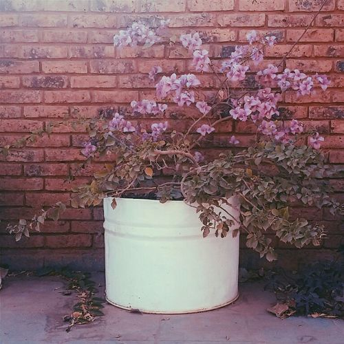 The Places I've Been Today Flower Botanic Tumblr OpenEdit Idrandomness