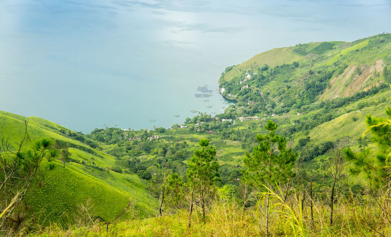 Toba lake scenery from highland view Beauty In Nature Countryside Danau Danau Toba Day Grass Green Green Color Growth Hill INDONESIA Landscape Lush Foliage Mountain Mountain Range Nature No People Non-urban Scene Outdoors Plant Scenics Toba Tranquil Scene Tree Valley