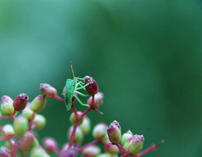 Green bug EyeEm Best Shots - Nature EyeEm Best Shots EyeEmNewHere EyeEm Nature Lover Nature Plant Growth No People Close-up Beauty In Nature Insect Outdoors