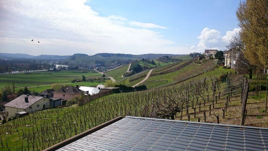 Luxembourg Moseltal Moselle Wineyard Wineroute Weinberg Weinstraße
