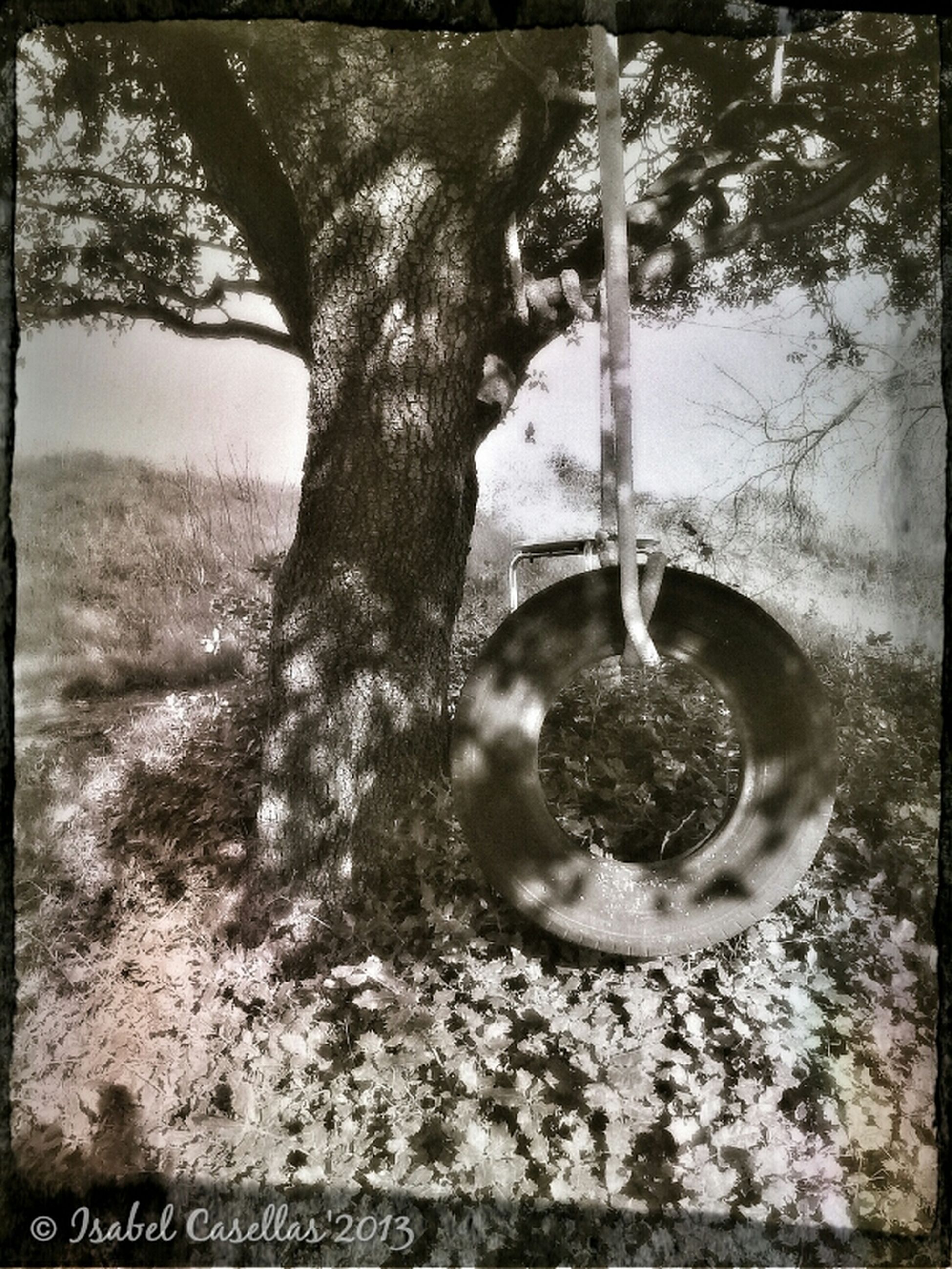 transfer print, auto post production filter, metal, close-up, focus on foreground, tree, day, metallic, outdoors, no people, chain, field, protection, safety, rusty, old, nature, hanging, part of, selective focus