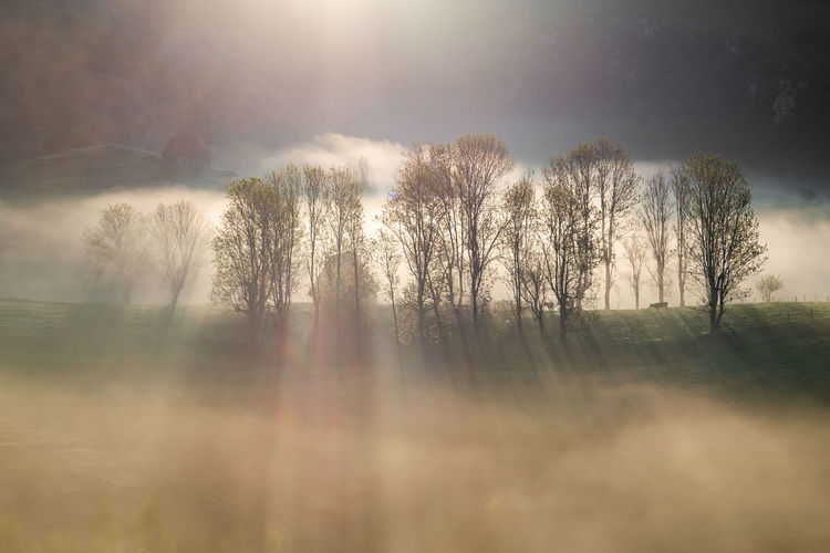 Sunlight streaming through trees against sky