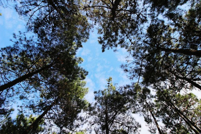 Tree Low Angle View Nature Sky No People Beauty In Nature Freshness Beauty In Nature Freshness Nature Day Tree