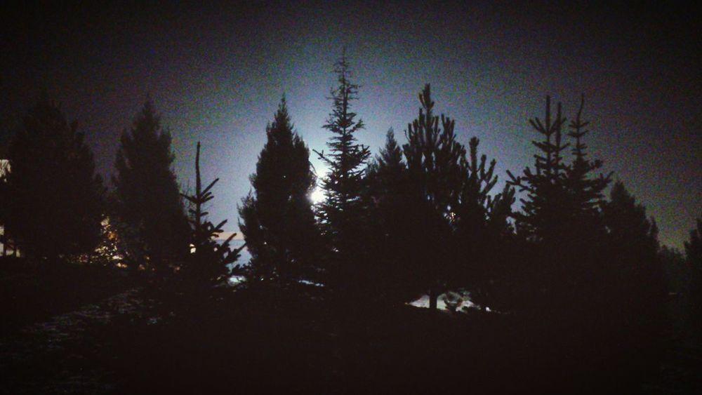 Hugging A Tree Nature Night Ankara Batıkent Night Lights