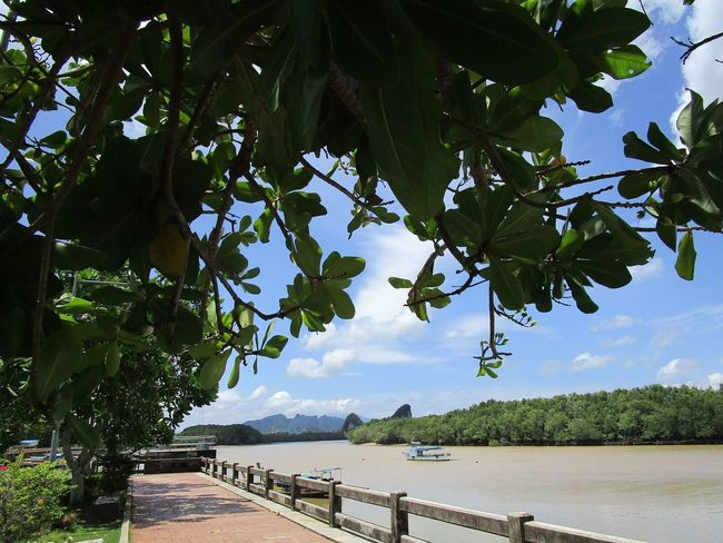 Amazing Thailand #Thailand #journey #krabi #travel Beauty In Nature Day Green Color Growth Leaf Nature Outdoors Plant Plant Part River Scenics - Nature Sky Tranquil Scene Tree Water