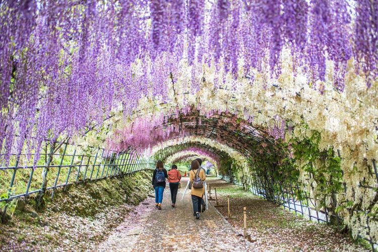 People on purple flowering plants in park
