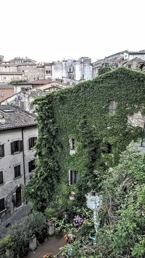 Ivy Not Selected For Market Green Wall Garden Umbria Perugia Italy Wall Old Town Outdoors Outdoor Photography Daylight Travel Photography Tourism Stone Sky Architecture Built Structure Ivy TOWNSCAPE Housing Settlement Creeper Old Town Tiled Roof  Roof Tile Townhouse Residential District