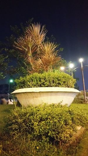 bonzay Agly Agriculture Flower Long Exposure Outdoors Sky Tree Grass Nature