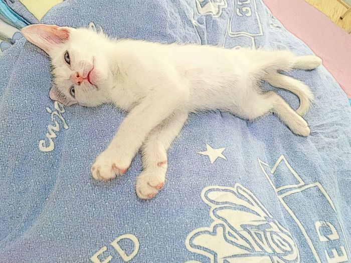 Cat Catoon Pet Sushi Hot Day Too Hot Lying In Bed Lying Sleep Cute Cute Pets Cute Cats
