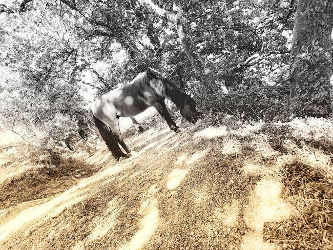 Portugal_em_fotos Huawei P20 Pro Natureza Cavalo Selvagem Herbivorous