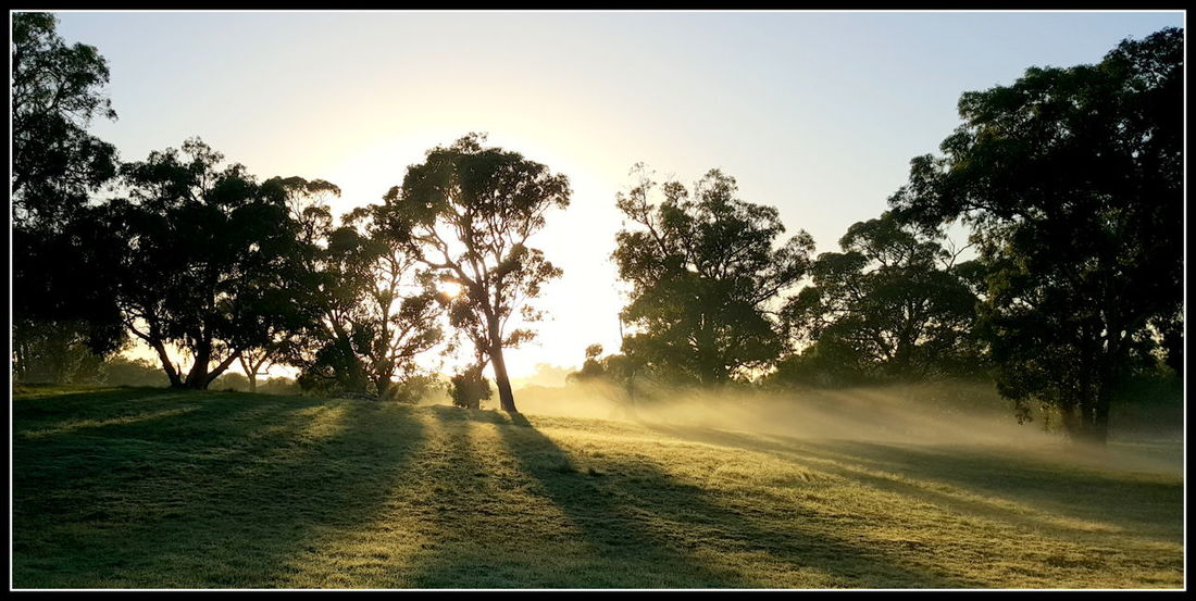 Beauty In Nature Day Foggy Morning Growth Had To Stop And Click Hometown Idyllic Kingsley Landscape Nature Nature Photography Non-urban Scene On The Way To Work Outdoors Scenics Sky Sun Sunbeam Sunlight Sunrise Tranquil Scene Tranquility Tree Western Australia