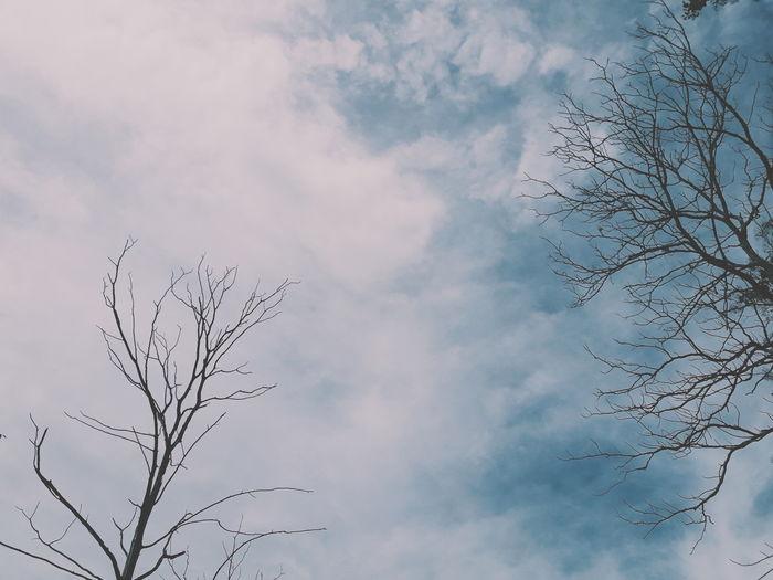 Bird Flying Sky
