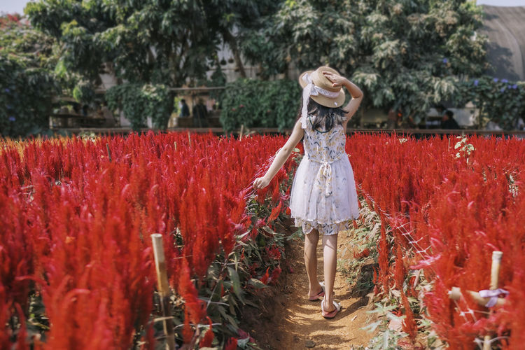 Rear view of woman standing by red flowering plants